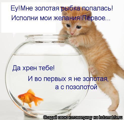 Котоматрица: Еу!Мне золотая рыбка попалась! Исполни мои желания!Первое... Да хрен тебе! И во первых я не золотая, а с позолотой
