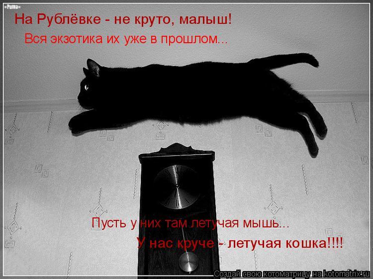 Котоматрица: Вся экзотика их уже в прошлом... Пусть у них там летучая мышь... У нас круче - летучая кошка!!!! На Рублёвке - не круто, малыш!