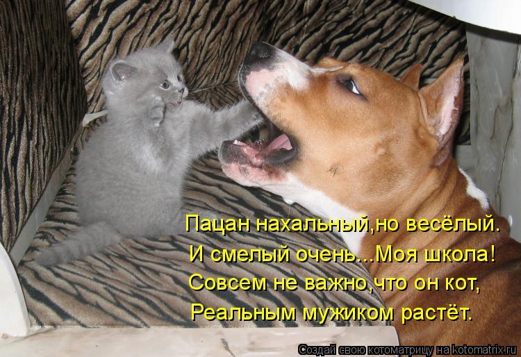 Котоматрица: Пацан нахальный,но весёлый. И смелый очень...Моя школа! Совсем не важно,что он кот, Реальным мужиком растёт.