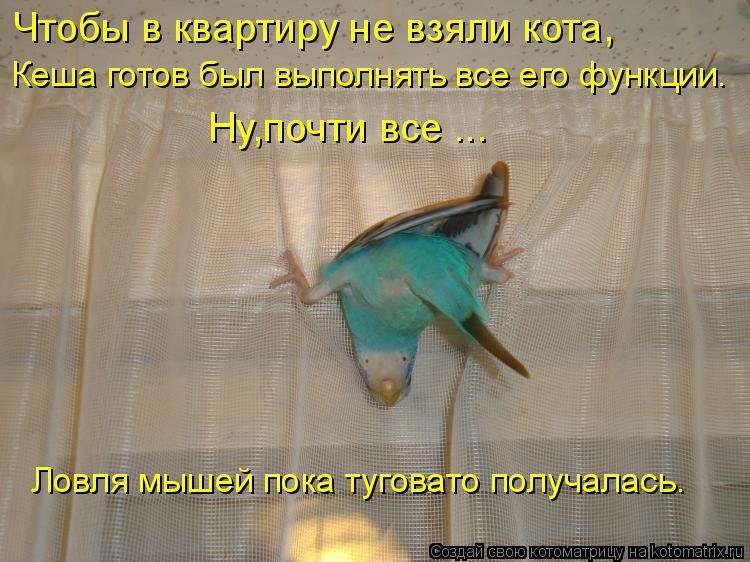 Котоматрица: Чтобы в квартиру не взяли кота, Кеша готов был выполнять все его функции. Ну,почти все ... Ловля мышей пока туговато получалась.