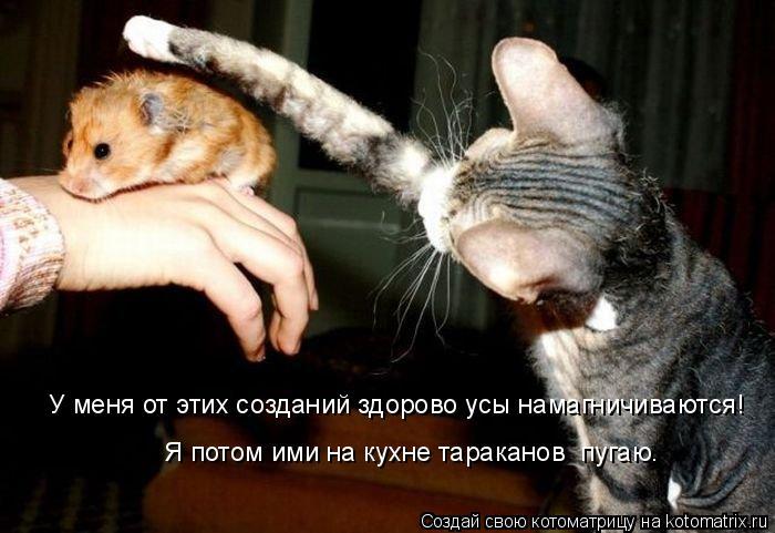 Котоматрица: У меня от этих созданий здорово усы намагничиваются! Я потом ими на кухне тараканов  пугаю.