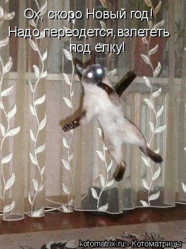 Котоматрица: Ох, скоро Новый год! Надо переодется,взлететь  под ёлку!