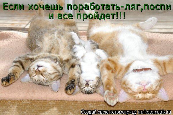Котоматрица: Если хочешь поработать-ляг,поспи  и все пройдет!!!