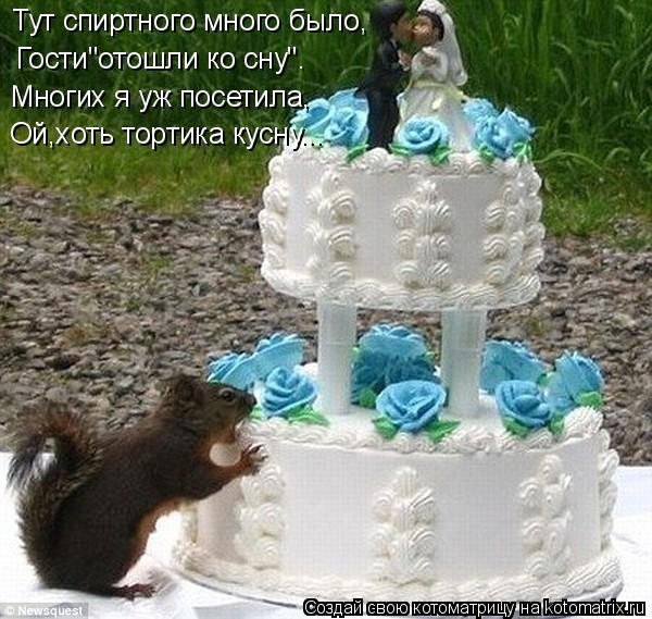 """Котоматрица: Тут спиртного много было, Гости""""отошли ко сну"""". Многих я уж посетила, Ой,хоть тортика кусну..."""