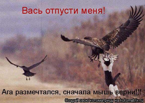 Котоматрица: Вась отпусти меня! Ага размечтался, сначала мышь верни!!!