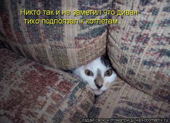 Котоматрица: Никто так и не заметил что диван  тихо подползал к котлетам...