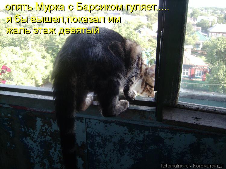 Котоматрица: опять Мурка с Барсиком гуляет..... я бы вышел,показал им жаль этаж девятый