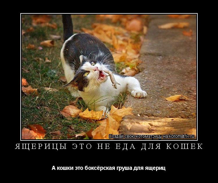Котоматрица: Ящерицы это не еда для кошек А кошки это боксёрская груша для ящериц