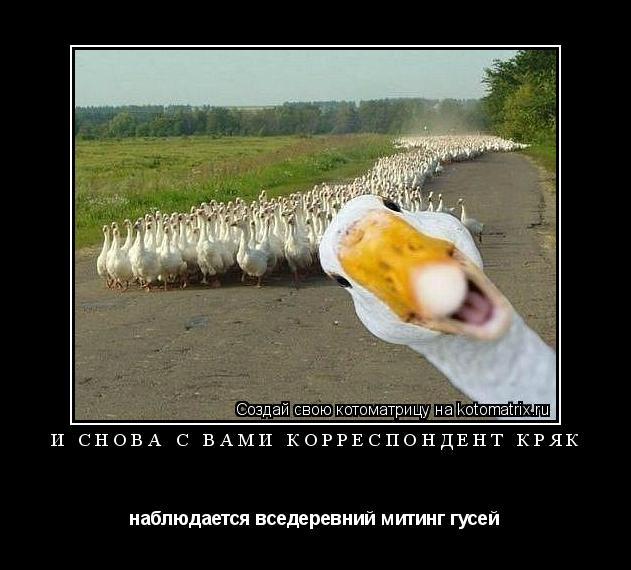 Котоматрица: И снова с вами корреспондент Кряк наблюдается вседеревний митинг гусей