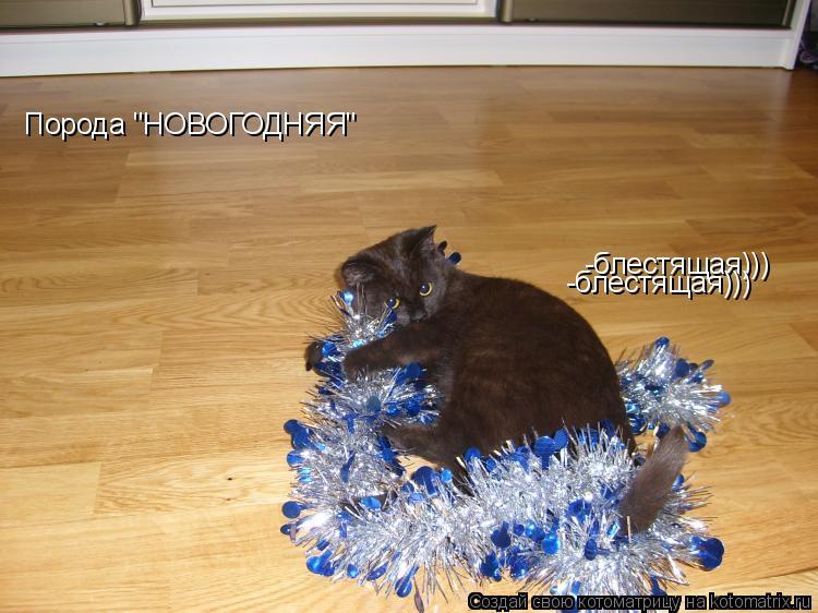 """Котоматрица: Порода """"НОВОГОДНЯЯ"""" -блестящая))) -блестящая)))"""