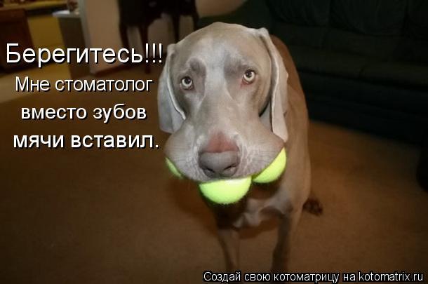 Котоматрица: Мне стоматолог вместо зубов мячи вставил. Берегитесь!!!