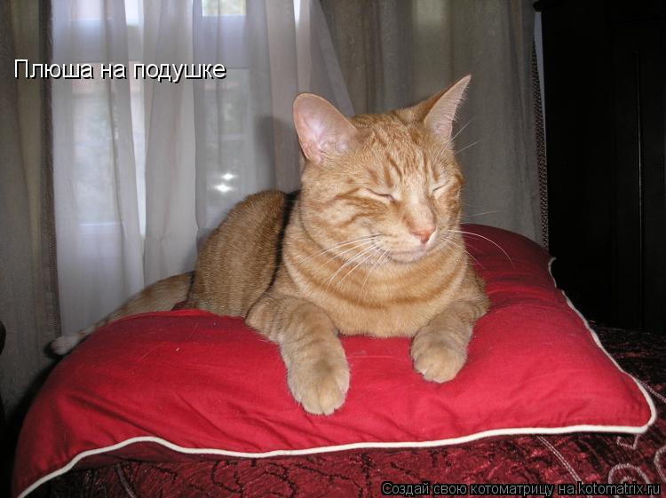 Котоматрица: Плюша на подушке