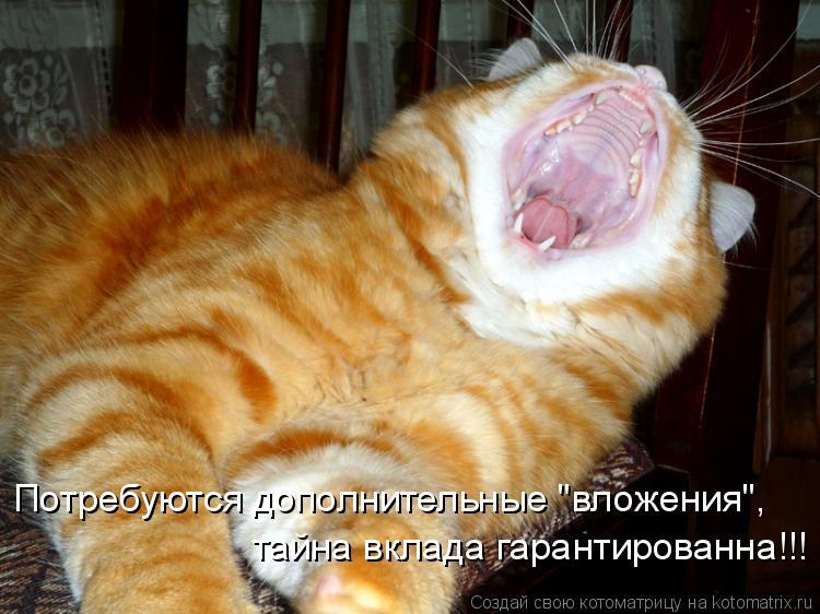 """Котоматрица: Потребуются дополнительные """"вложения"""", тайна вклада гарантированна!!!"""