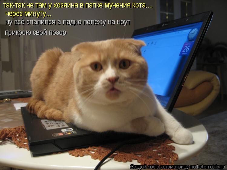 Котоматрица: через минуту... так-так че там у хозяина в папке мучения кота.... прикрою свой позор ну всё спалился а ладно полежу на ноут