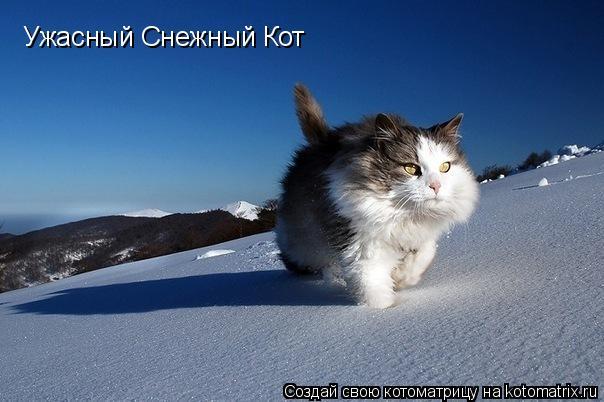 Котоматрица: Ужасный Снежный Кот