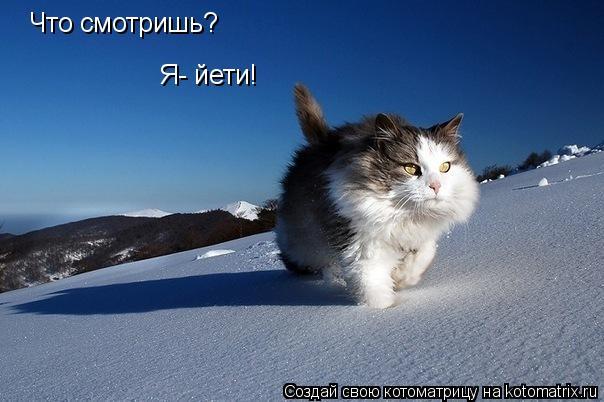 Котоматрица: Что смотришь? Я- йети!