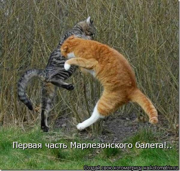 Котоматрица: Первая часть Марлезонского балета!..