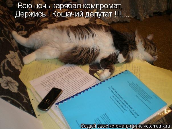 Котоматрица: Всю ночь карябал компромат, Держись ! Кошачий депутат !!!....