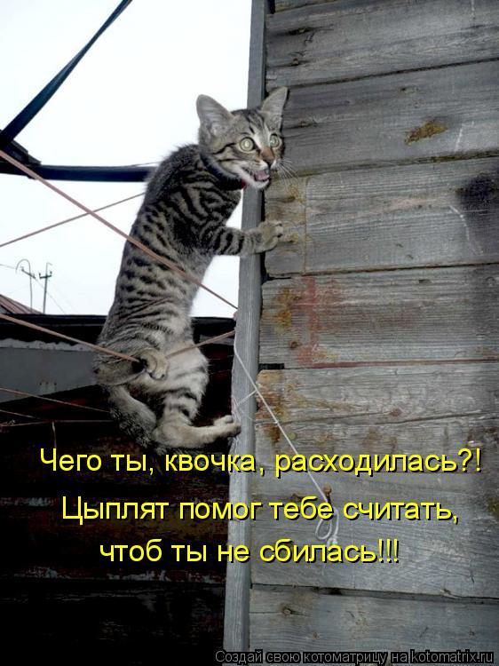 Котоматрица: Чего ты, квочка, расходилась?! Цыплят помог тебе считать, чтоб ты не сбилась!!!