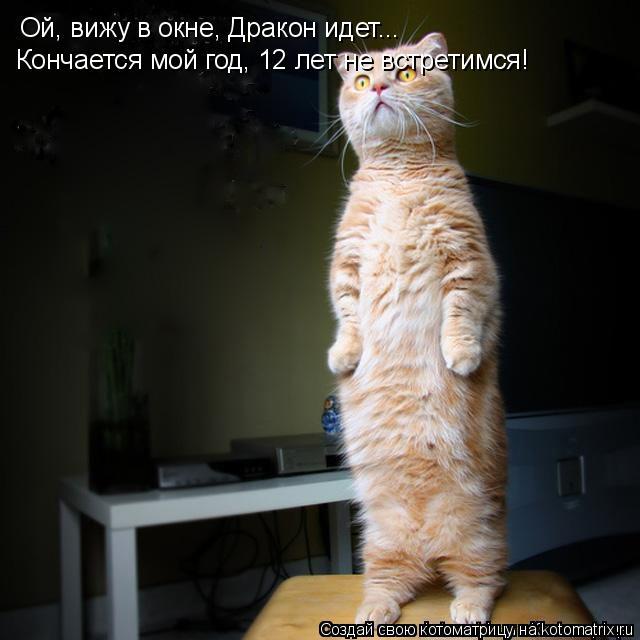 Котоматрица: Ой, вижу в окне, Дракон идет... Кончается мой год, 12 лет не встретимся!