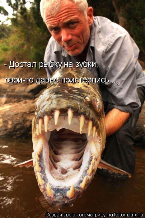 Котоматрица: - Достал рыбку на зубки, свои-то давно поистёрлись....