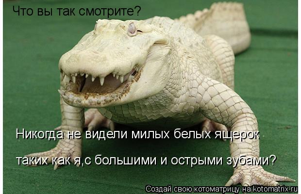 Котоматрица: Что вы так смотрите? Никогда не видели милых белых ящерок   таких как я,с большими и острыми зубами?