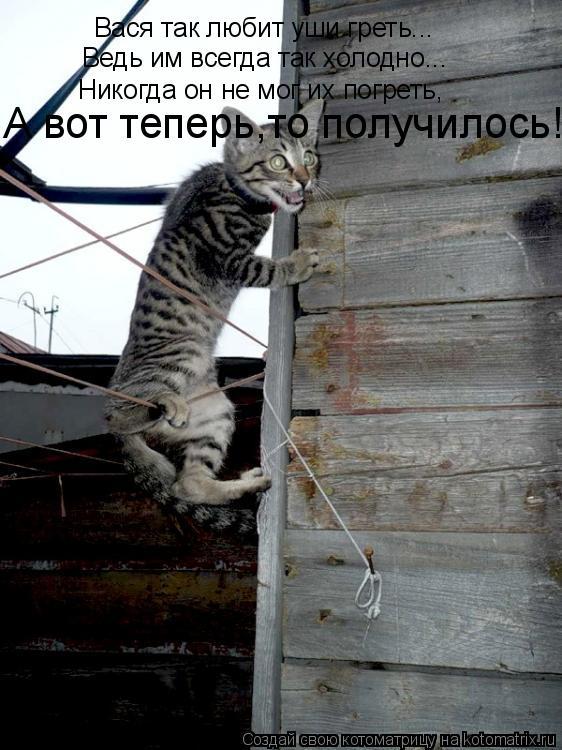 Котоматрица: Вася так любит уши греть... Ведь им всегда так холодно... Никогда он не мог их погреть, А вот теперь,то получилось!