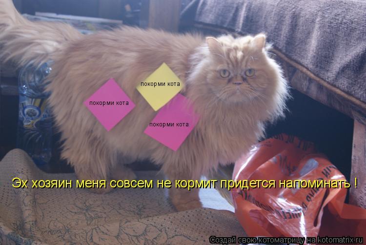 Котоматрица: покорми кота  покорми кота  покорми кота  Эх хозяин меня совсем не кормит придется напоминать ! Эх хозяин меня совсем не кормит придется нап