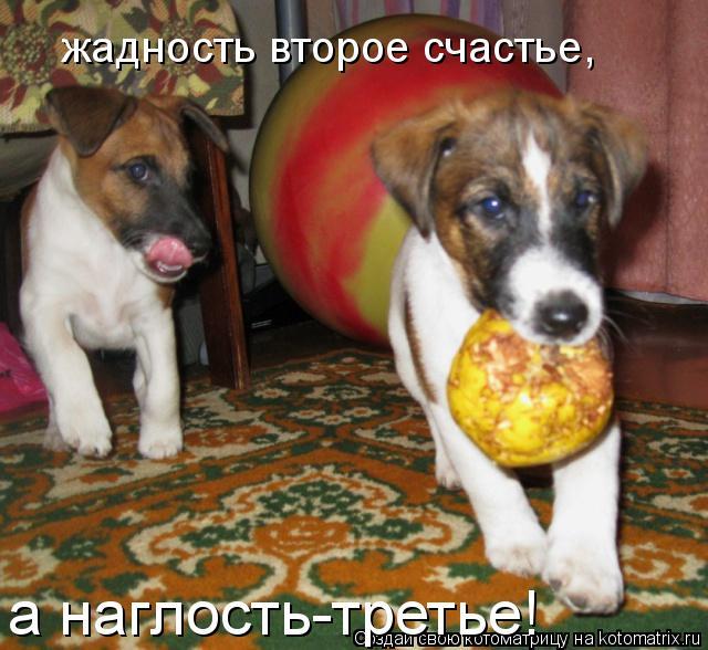 Котоматрица: жадность второе счастье, а наглость-третье!