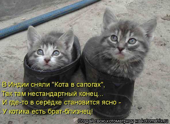 """Котоматрица: В Индии сняли """"Кота в сапогах"""", Так там нестандартный конец... И где-то в серёдке становится ясно - У котика есть брат-близнец!"""