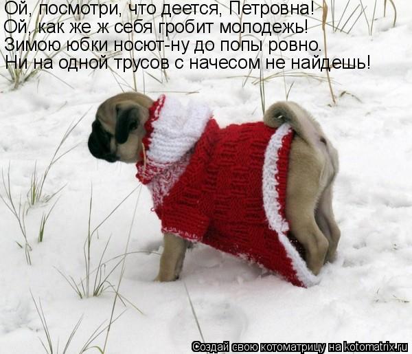 Котоматрица: Ой, посмотри, что деется, Петровна! Ой, как же ж себя гробит молодежь! Зимою юбки носют-ну до попы ровно. Ни на одной трусов с начесом не найдеш