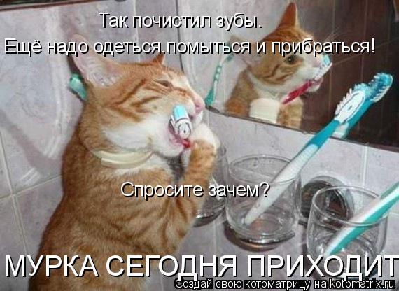 Котоматрица: Так почистил зубы. Ещё надо одеться.помыться и прибраться! Спросите зачем? МУРКА СЕГОДНЯ ПРИХОДИТ!!!