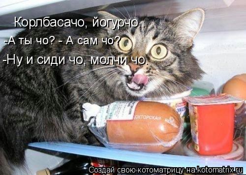 Котоматрица: Корлбасачо, йогурчо.. -Ну и сиди чо, молчи чо. -А ты чо? - А сам чо?