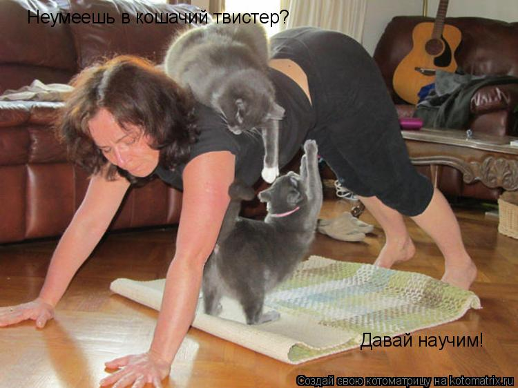 Котоматрица: Неумеешь в кошачий твистер? Давай научим!