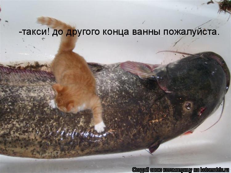 Котоматрица: -такси! до другого конца ванны пожалуйста.