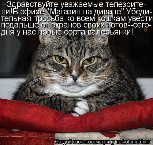 """Котоматрица: --Здравствуйте,уважаемые телезрите- ли!В эфире """"Магазин на диване"""".Убеди- тельная просьба ко всем кошкам:увести подальше от экранов своих ко"""