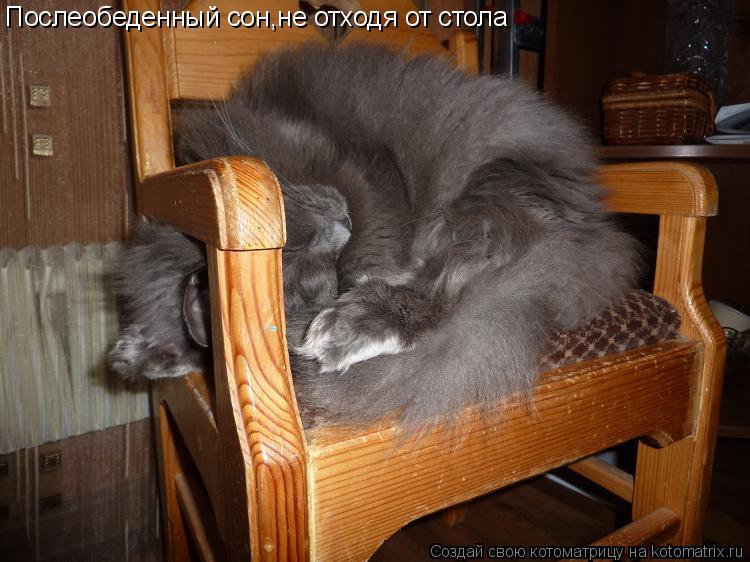 Котоматрица: Послеобеденный сон,не отходя от стола