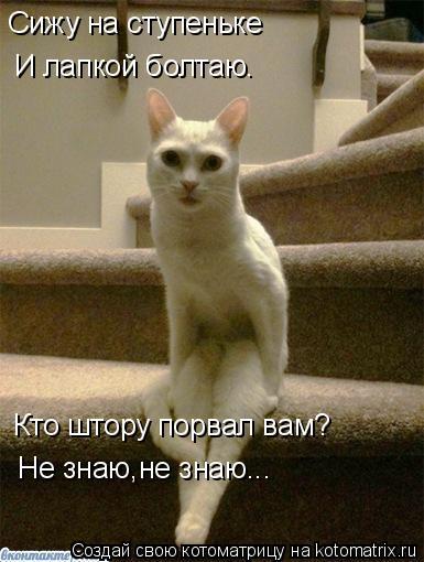 Котоматрица: Сижу на ступеньке И лапкой болтаю. Кто штору порвал вам? Не знаю,не знаю...