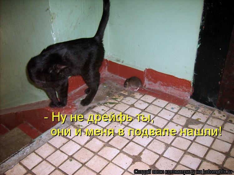 Котоматрица: - Ну не дрейфь ты, они и меня в подвале нашли!