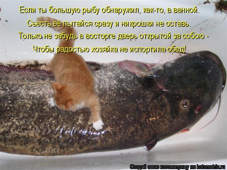 Котоматрица: Если ты большую рыбу обнаружил, как-то, в ванной. Съесть её пытайся сразу и никрошки не оставь. Только не забудь в восторге дверь открытой за