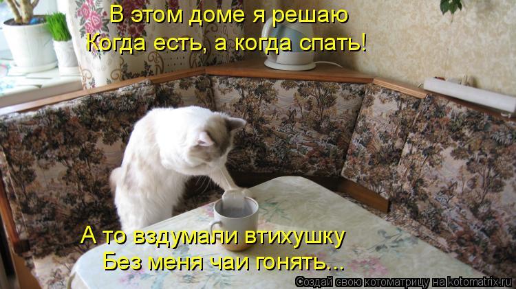 Котоматрица: В этом доме я решаю Когда есть, а когда спать! А то вздумали втихушку  Без меня чаи гонять...