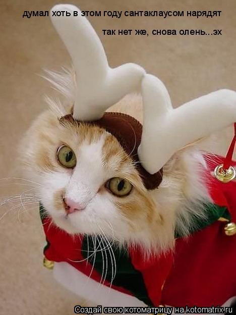 Котоматрица: думал хоть в этом году сантаклаусом нарядят так нет же, снова олень...эх