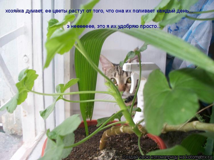Котоматрица: хозяйка думает, ее цветы растут от того, что она их поливает каждый день... э неееееее, это я их удобряю просто...