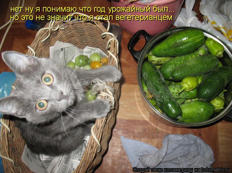Котоматрица: нет ну я понимаю что год урожайный был... но это не значит что я стал вегетерианцем