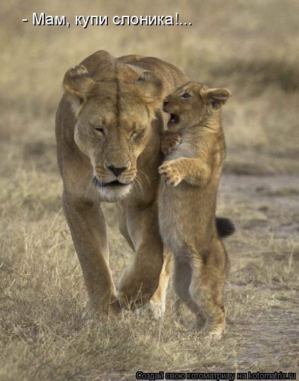 Котоматрица: - Мам, купи слоника!...
