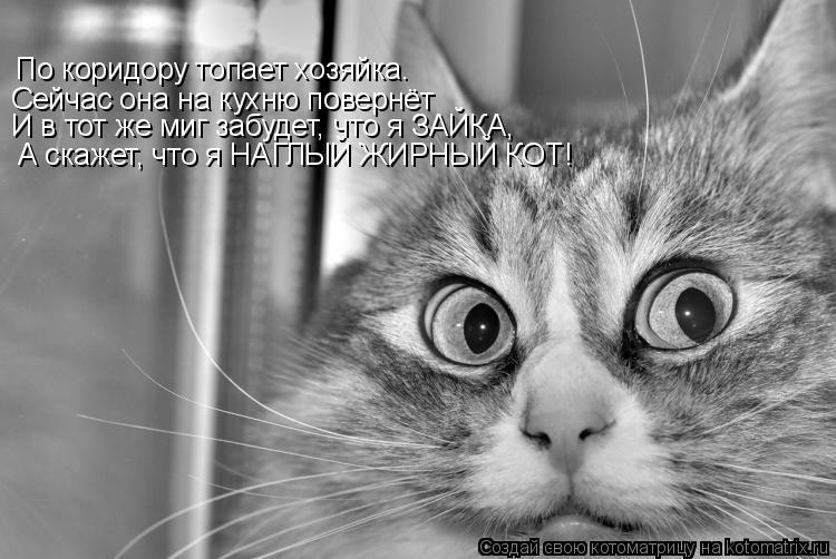 Котоматрица: Сейчас она на кухню повернёт По коридору топает хозяйка. И в тот же миг забудет, что я ЗАЙКА, А скажет, что я НАГЛЫЙ ЖИРНЫЙ КОТ!