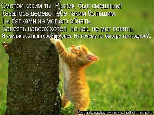 Котоматрица: Смотри каким ты, Рыжик, был смешным! Казалось дерево тебе таким большим. Ты лапками не мог его обнять, Залезть наверх хотел, но как, не мог пон