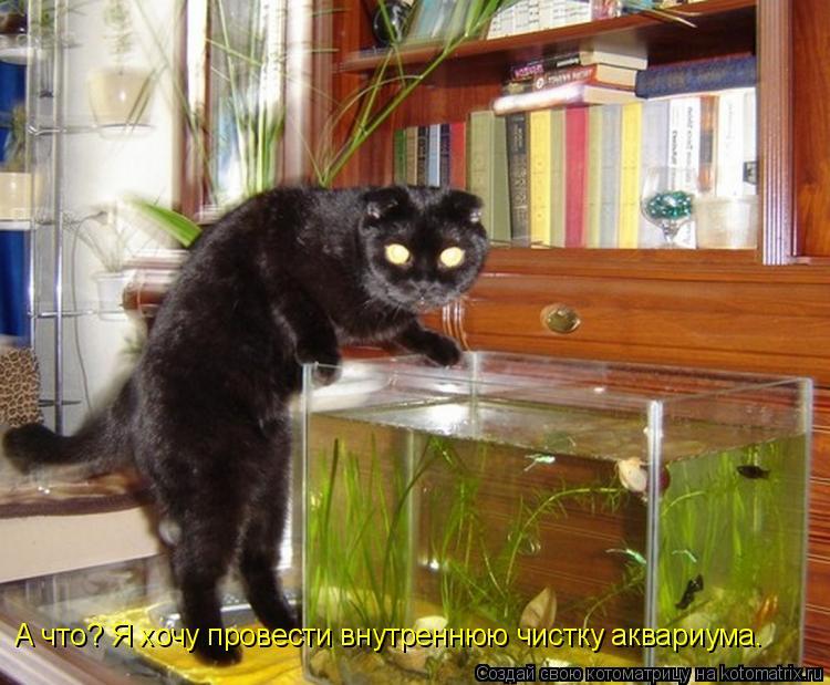 Котоматрица: А что? Я хочу провести внутреннюю чистку аквариума.