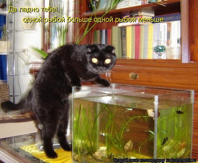 Котоматрица: Да ладно тебе! одной рыбой больше.одной рыбой меньше...