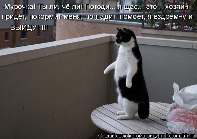 Котоматрица: -Мурочка! Ты ли, чё ли! Погоди... я щас... это... хозяин  придёт, покормит меня, погладит, помоет, я вздремну и  ВЫЙДУ!!!!!